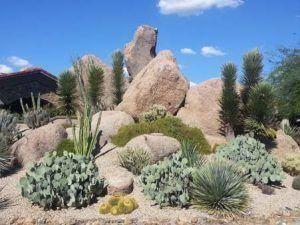 Scottsdale AZ Landscapers